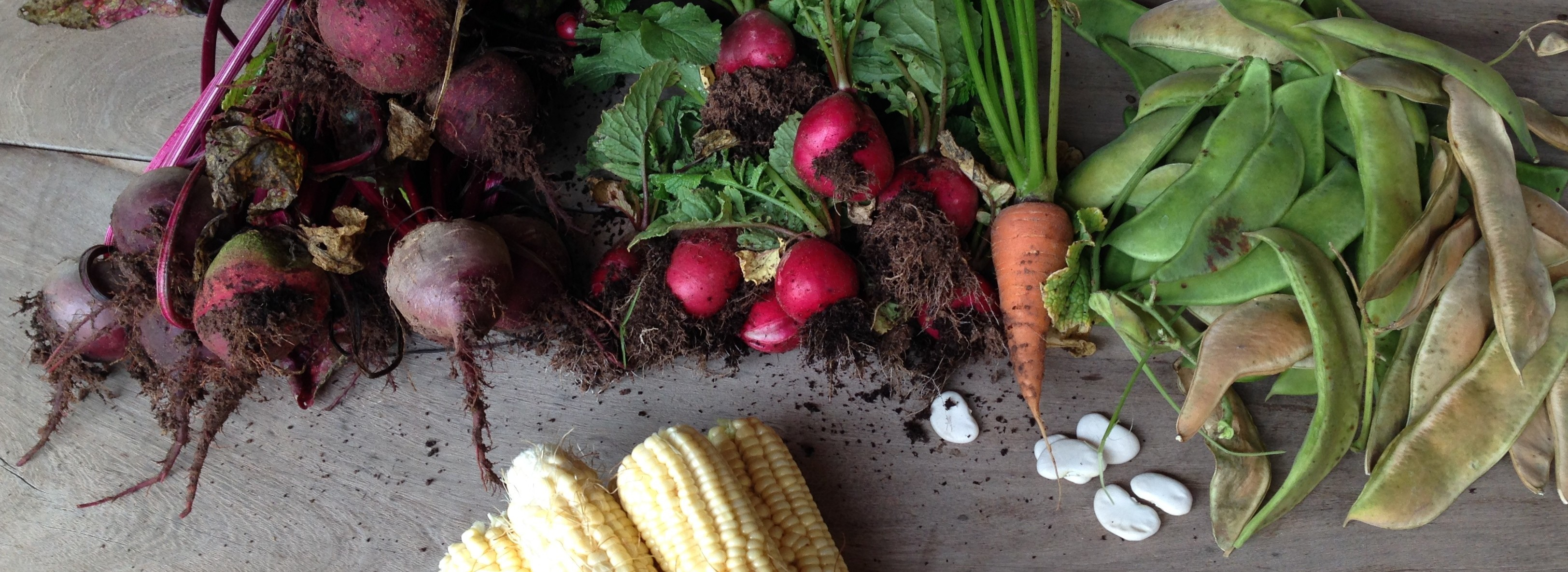 Grow your Food!